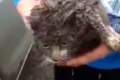 Esta gatita valiente recorrió más de 100 kilómetros por Rusia debajo de un coche