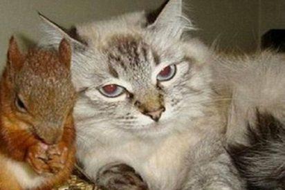 Esta gata se convierte en la madre adoptiva de una ardilla