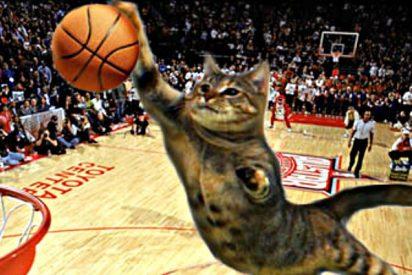 El gato que tiene asustadas a las estrellas de la NBA