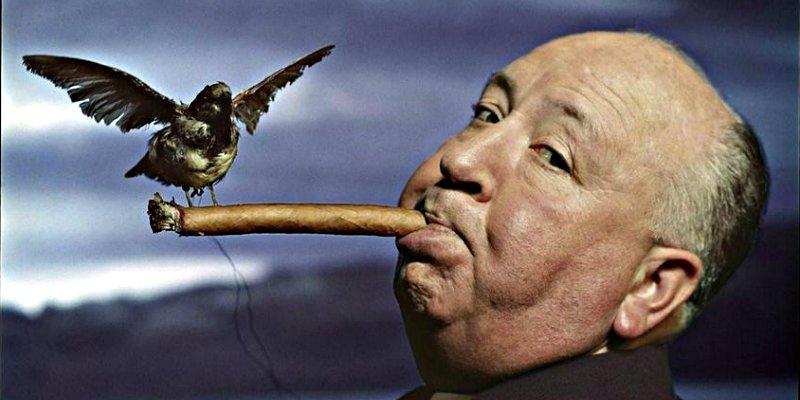 Las 10 cosas sobre los pájaros que nadie te ha contado