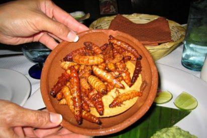 Los insectos fueron parte básica de la dieta de los primeros humanos
