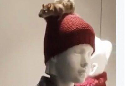 Una rata en el escaparate de ropa infantil del Zara encrespa a los troles de las redes