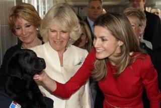 El día en que Letizia echó de casa al perro favorito de Felipe para que lo devoraran las alimañas