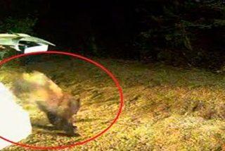 Así liberaron al oso que se quedó encerrado en un coche en EE.UU.