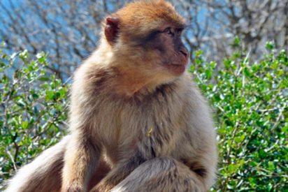 Empuja a un macaco y sufre esta cruel venganza