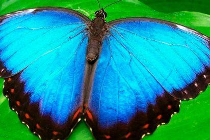 Arrestan a una mujer por robar una mariposa