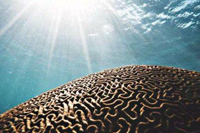 Clima: La olas de calor marinas son ahora un tercio más frecuentes que hace un siglo
