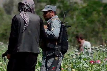 Así destruyen los militares un campo de amapolas destinadas a la producción de opio en Afganistán