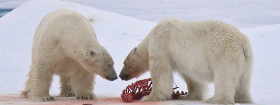 Los grandes barcos pasan cada vez más cerca del Polo Norte por el deshielo ártico