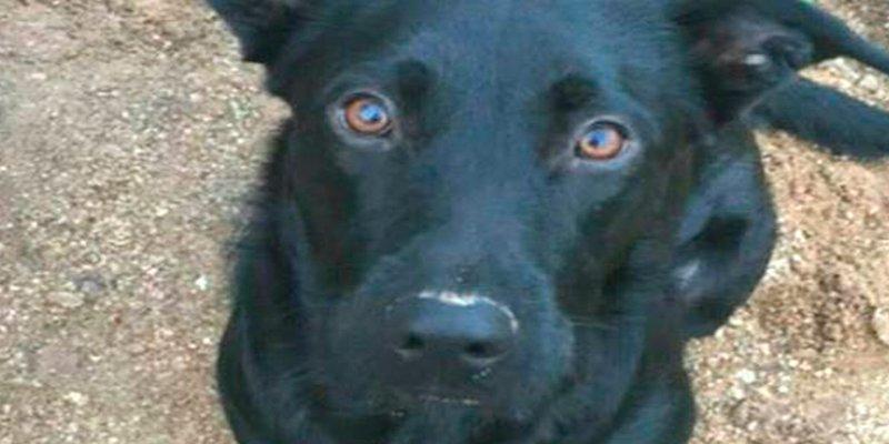 Mataron a su perra en el veterinario, y para colmo tuvieron que aguantar la actitud del cirujano