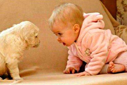 Cuando chocan perros y niños