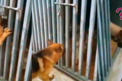 Este perro rescata a su amiga enjaulada y se vuelve viral en Facebook no por su heroismo