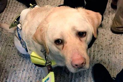La falta de humanidad de los pasajeros del Metro con un ciego y su perro guía