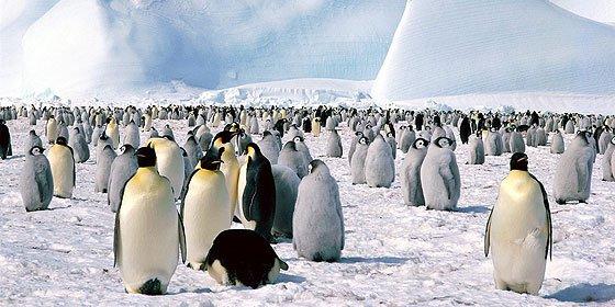 Vacaciones en el Fin del Mundo: La Antártida para turistas