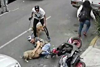 Pelea estilo lucha libre con un pitbull para salvar a su mascota y sacude estacazos al dueño del perro