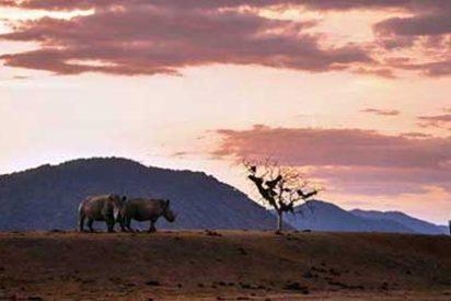 Qué hacer y ver en Sudáfrica