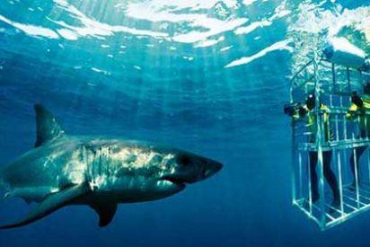 Otoño en Sudáfrica: Época de avistamiento de tiburones y temporada de surf