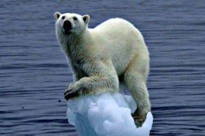 Clima: El calentamiento global favorece a insectos y arañas en el Artico