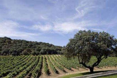 Valbusenda, Hotel, Bodega & Spa ofrece la mejor opción para disfrutar de un Brunch entre viñedos