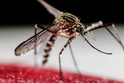 Paraguay en alerta epidemiológica por un aumento descontrolado del dengue