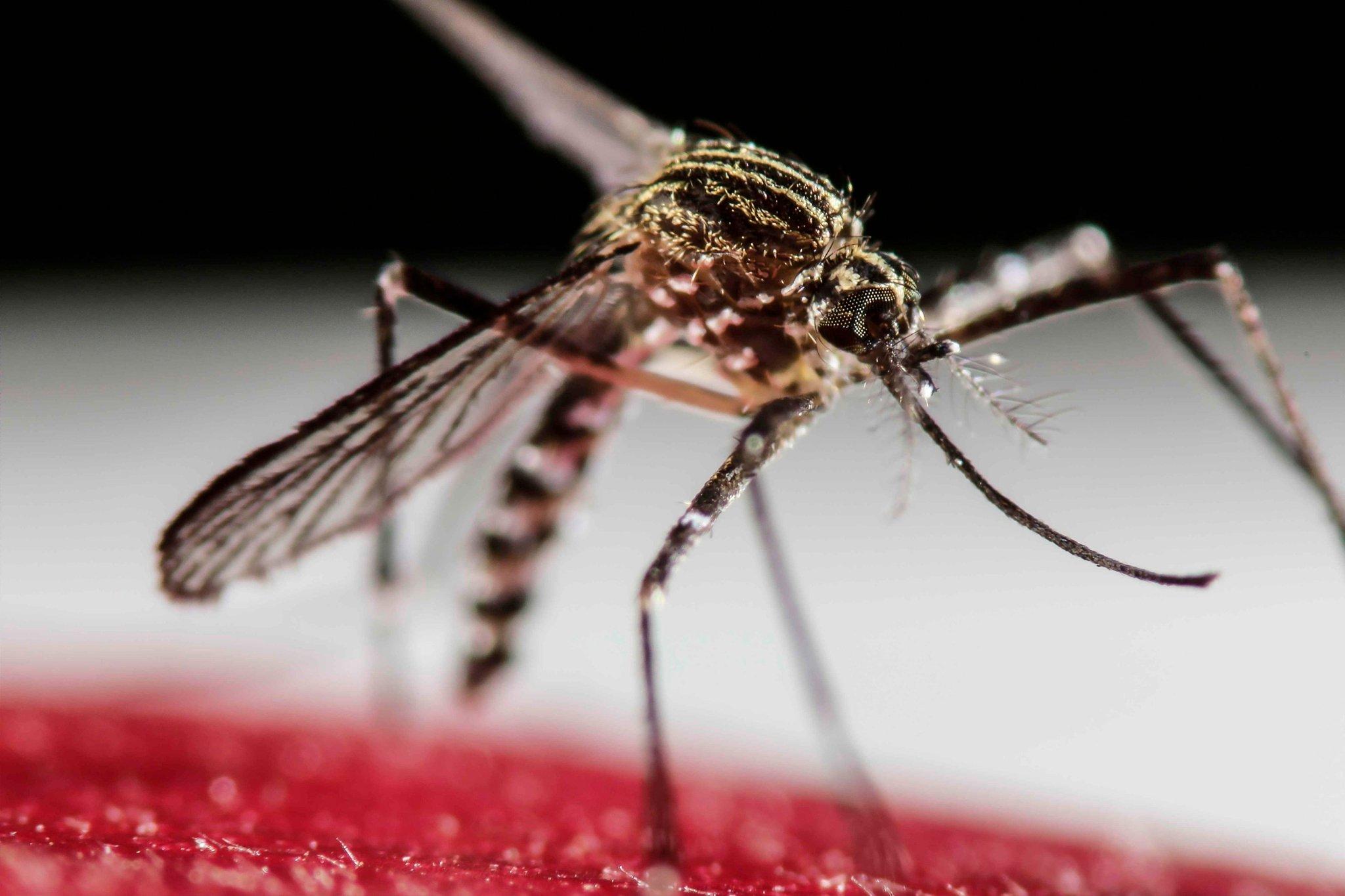 Descubren un tipo de aborto espontáneo asociado con infección por virus del Zika