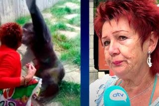 EL zoo prohíbe la entrada a esta mujer, que tenía una 'relación amorosa' con un chimpancé