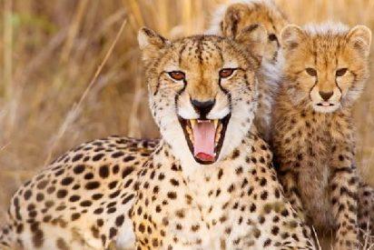 Esta familia sale del coche durante un safari y se lleva el susto de su vida