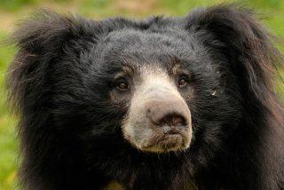 El oso mata al taxista que baja del coche para hacerse un selfie con él