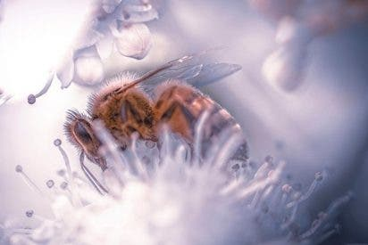 Esto es lo que hace tan especiales a las abejas