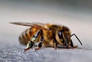 El tuit de la Policía Nacional sobre las abejas que hará que te pique la curiosidad