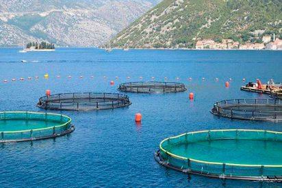 ¿Sabías que la acuicultura puede salvar la Tierra?