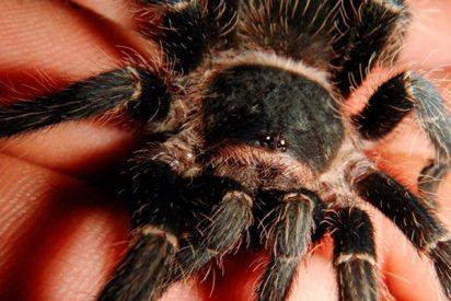 Esta mujer sostiene así en su mano decenas de arañas pequeñas sin inmutarse