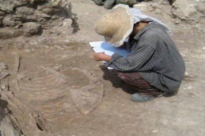 Encuentran evidencias arqueológicas de la domesticación de burros hace 4.700 años