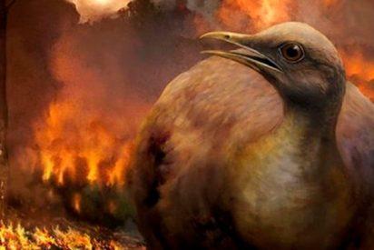 Descubren que las aves de suelo se salvaron del evento que extinguió a los dinosaurios