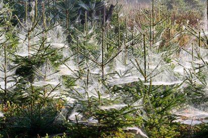 Este bosque se convierte en una película de terror tras una brutal invasión de orugas