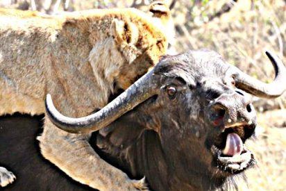 Parque Kruger: La mejor pelea de animales que jamás has visto