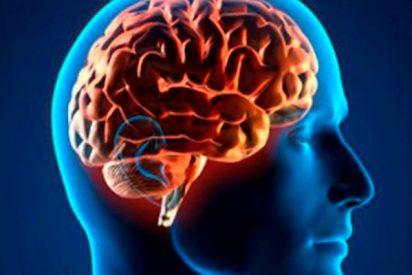 Descubren que el hipocampo podría estar también detrás de enfermedades como la ansiedad o la depresión