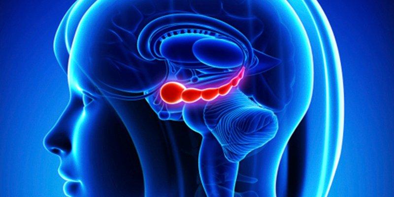 Nuevo estudio descubre un posible método efectivo para detener los cánceres cerebrales pediátricos incurables