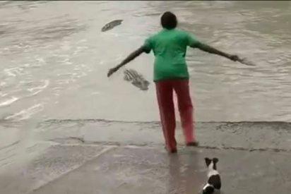 Esta ama de casa se enfrenta al feroz cocodrilo con una simple zapatilla