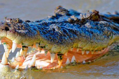 Este cocodrilo casi le arranca la mano a un cuidador que transmitía en directo en la Red