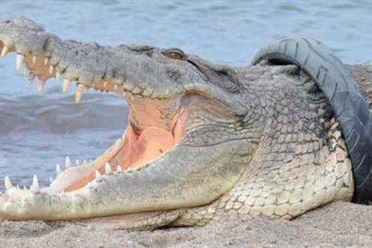 Un cocodrilo le arranca el brazo días antes de su boda pero eso no la detuvo