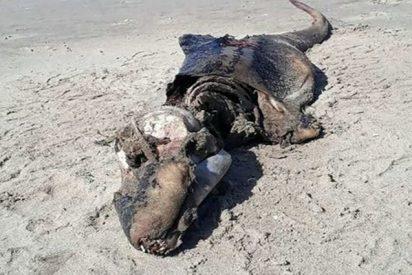 Esta extraña criatura encontrada en las costas del Reino Unido trae de cabeza a los expertos