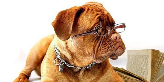 """Perroturismo': Equipo básico para viajar con tu mascota"