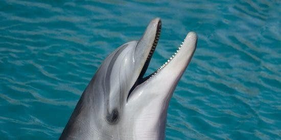 Los lenguajes silbados humanos fundamentales para entender a los delfines