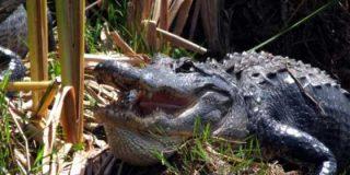 Qué ver y hacer en los Everglades de Florida