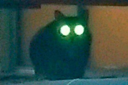 Esta gata deambula por un aeropuerto de Nueva York y esquiva la persecución policial por una semana
