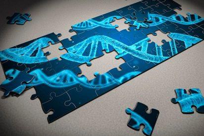La longevidad oculta en la edición génica