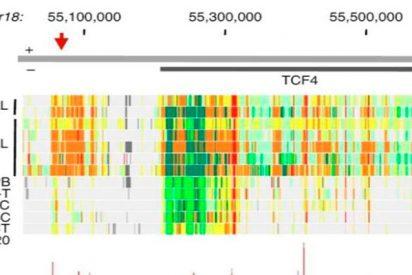 Descifran el genoma de la leucemia más común en adultos