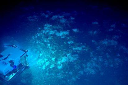 No te debes perder estas impresionantes imágenes del fondo marino del golfo de México