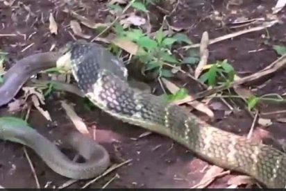 La serpiente grande se come a la chica